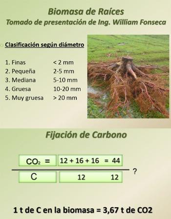 Biomasa Raices