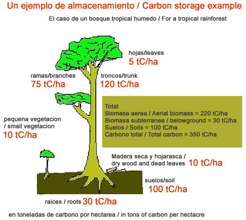 Tropical Rainforest Trees - Carbon Sequestration | Community