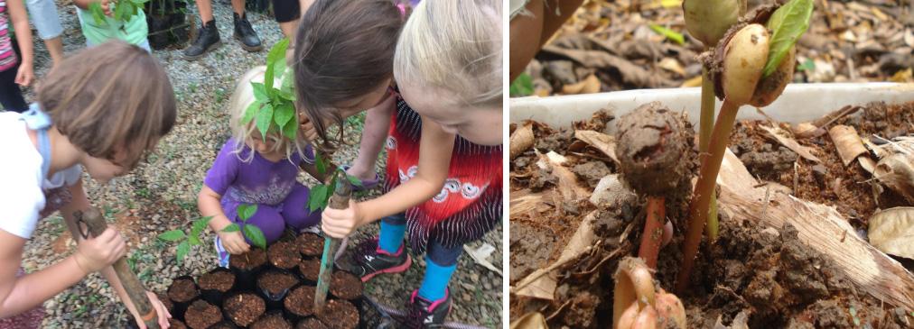 Community Tree Nurseries